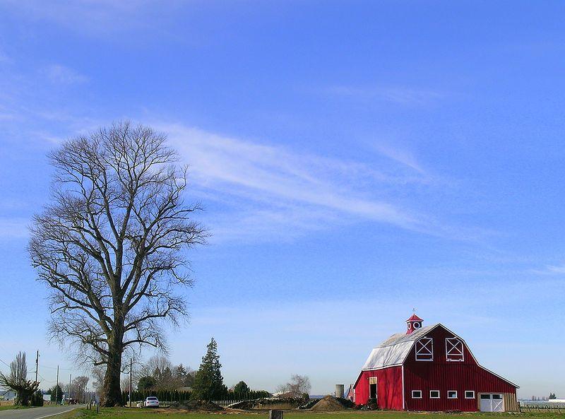 Bigstockphoto_American_Farmer_144762