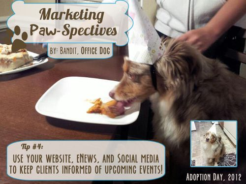 Marketingpawspectivestip4