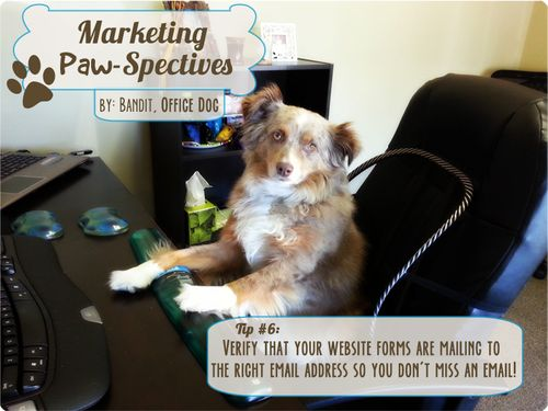 Marketingpawspectiveswk6