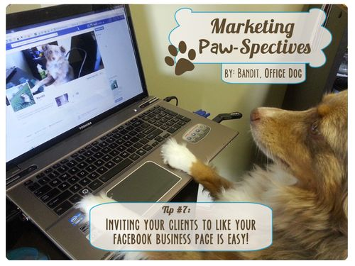 Marketingpawspectivestip7 copy