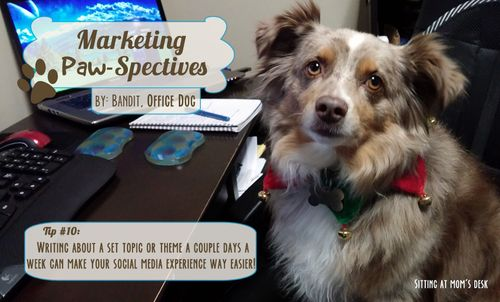 Marketingpawspectivestip10 copy
