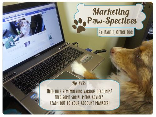 Marketingpawspectivestip12 copy