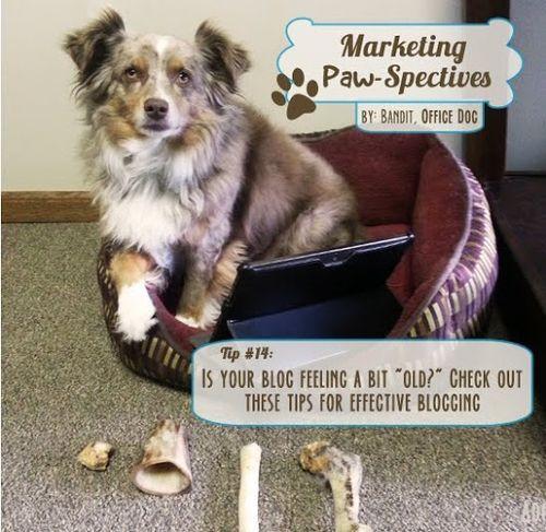 Marketingpawspectivestip14 copy