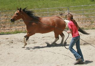 Bigstock-Lunging-A-Horse-3381970