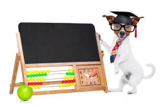 Bigstock-School-Teacher-Dog-88969544