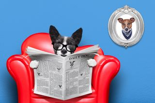 Bigstock-Dog-Reading-Newspaper-86059202
