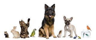 Bigstock-Group-Of-Pets-Together-In-Fron-8258867