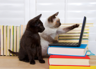 Bigstock--cats watching videos 141825902