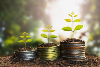 Bigstock--money coins growing 149788214