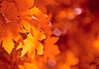 Bigstock-Autumn-Leaves-3550640